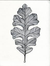 the 25 best leaf drawing ideas on pinterest watercolor leaves