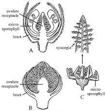 Where Is The Pollen Produced In A Flower - geol 331 principles of paleontology