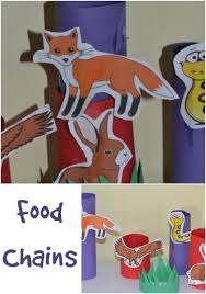 best 25 food chain worksheet ideas on pinterest food chains