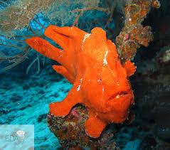 dangerous sea creatures the misunderstood the underestimated