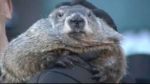 groundhog 2016 punxsutawney phil sees shadow predicts