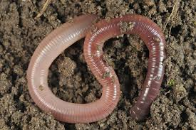 How To Make A Paper Worm - worms escaping compost how to escape proof a worm bin