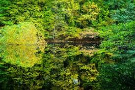 beautiful autumn colored trees reflected in a small pond one
