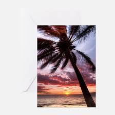 palm tree greeting cards cafepress
