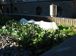 Vegetable Garden Designs For Small Yards by Roof Garden Design How To Build A Rooftop Garden