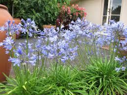 tips for planting summer blooming bulbs hgtv