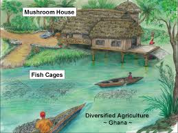 21st century diversified agriculture project for ghana aloha