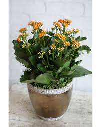 Plant Delivery Plants Delivery In Manchester Nh Chalifour U0027s Flowers