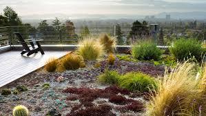 12 great drought tolerant plants sunset