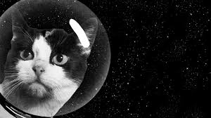 Cats In Small Spaces Video - the secret history of the first cat in space