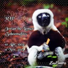 Lemur Meme - why goodnight sweet prince know your meme
