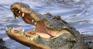 bartender resume template australia zoo crocodile feeding videos sat mar 11 stepping out florida