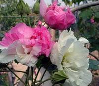 Cheap Flower Seeds - cheap mix perennial flower seeds free shipping mix perennial