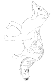 gray fox coloring page