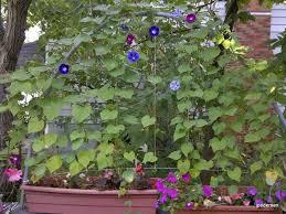 Downspout Trellis 40 Diy Homemade Structures To Plant Vines Trellis Arbor Pergola