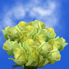 green roses light green color flowers bulk sale special real green roses