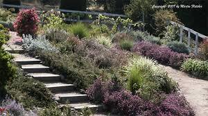 no sun plants full sun garden plants list california gardens