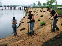 plants native to michigan 2 toxic spots down 12 to go michigan radio