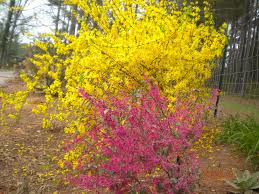 plants for early spring blooming the tree center
