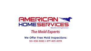 mold remediation removal home services