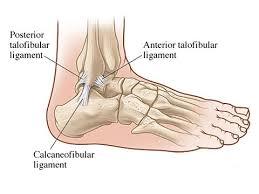 Posterior Inferior Tibiofibular Ligament Anterior Talofibular Ligament Function And Injury New Health Advisor