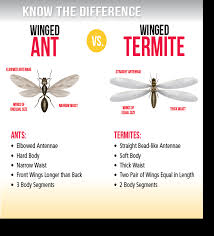 Winged Termites In Bathroom Termite Control In Delaware U0026 Maryland Activ Pest Solutions