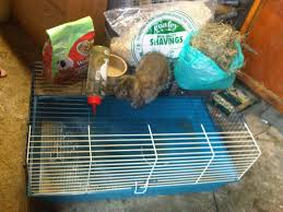 Rabbit Hutch Set Up Ne England Lop Rabbit Indoor Cage And Starter Kit Reptile Forums