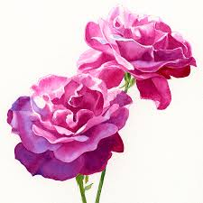 roses watercolor paintings fine art america