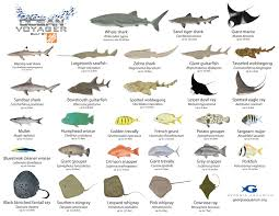aquarium fish names aquarium fish names fish that you might see