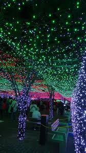 Reid Park Zoo Christmas Lights by 601 Best Christmas Around The World Images On Pinterest