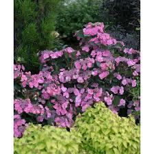 beautiful flower garden names photos garden and landscape ideas