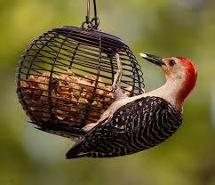 Florida Backyard Birds - what foods for what birds bird watcher u0027s digest