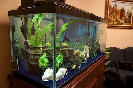 fish tank and fish aquarium design installations and maintenance