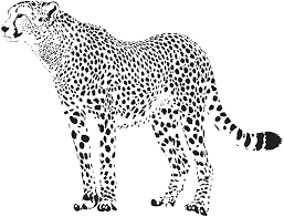 free cheetah clipart pictures clipartix