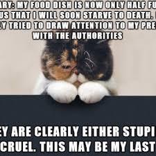 Sad Cat Meme - sad cat diary meme on a cold time about a half full food dish
