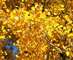 autumn color in the jemez mountains part i photo flurries