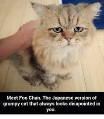 Unhappy Cat Meme - 25 best memes about grumpy cat lyrics grumpy cat lyrics memes