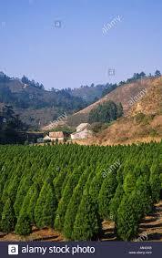 half moon bay christmas tree farm part 46 california black road