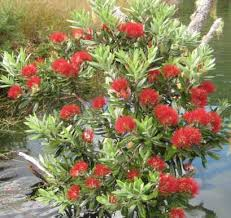 kiwireco recycled plastic waratahs garden products home