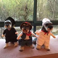 in costumes best 25 dog costumes ideas on dog costumes