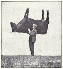stuffed ox dummy tree artificial rock deception in the work of