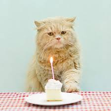 grumpy cat birthday card grumpy cat birthday card greeting cards