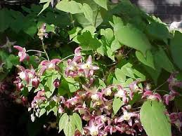 10 best plants for a dry shade garden with shrubs