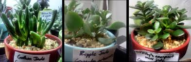 succulent plants under artificial light the good the bad and