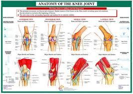 Knee Anatomy Pics 18 Grande Jpg V U003d1496933682