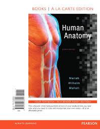 Human Anatomy And Physiology 8th Edition Marieb Wilhelm U0026 Mallatt Human Anatomy