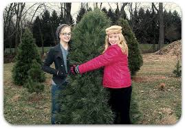 timber valley christmas tree farm home facebook