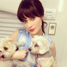 pets news tips u0026 guides glamour puppies news tips u0026 guides glamour