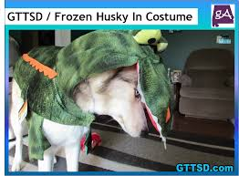 alabama halloween costumes this is what happens when a siberian husky wears a halloween