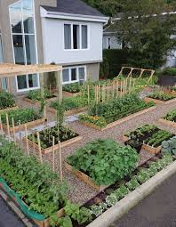 44 best garden images on pinterest gardening plants and edible